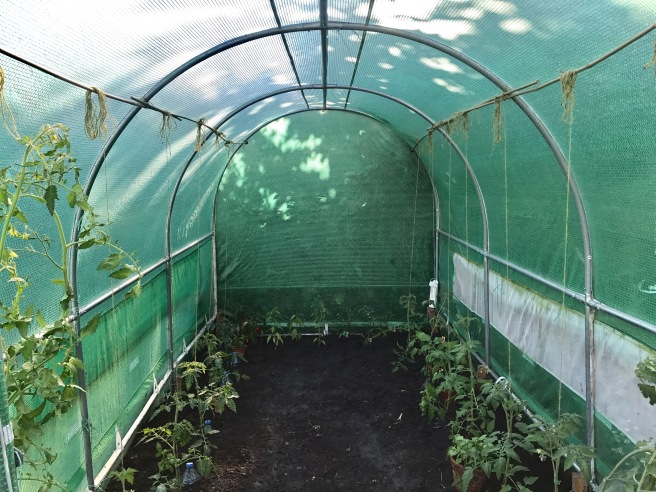Polytunnel July 2017