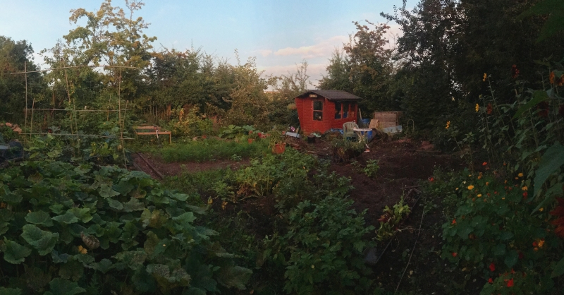 allotment late summer.jpg