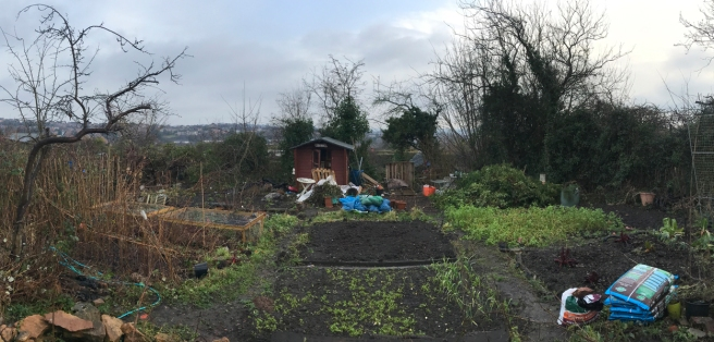 Panoramic view of Katrina's allotment, taken in January 2018