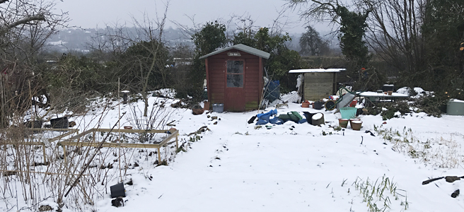 snowy allotment panorama